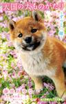 小学館ジュニア文庫 天国の犬ものがたり~ずっと一緒~-電子書籍