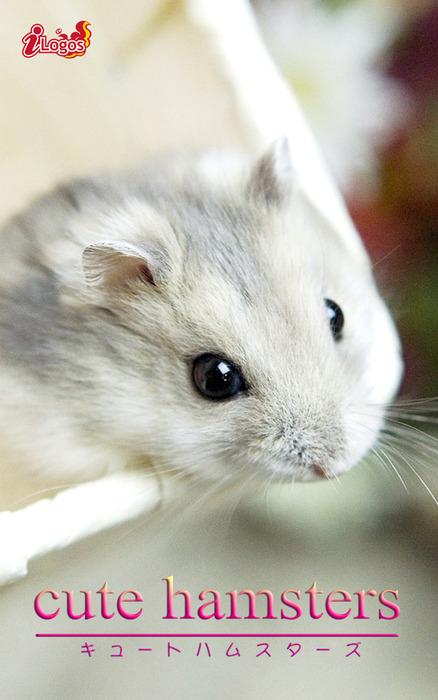 cute hamsters02 ジャンガリアンハムスター-電子書籍-拡大画像