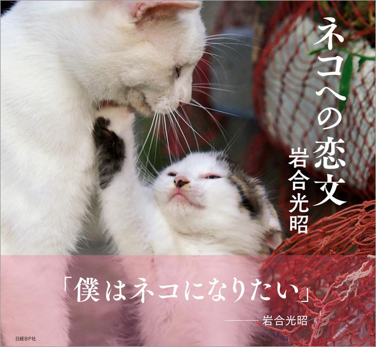 ネコへの恋文拡大写真