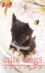 cute dogs17 チワワ-電子書籍