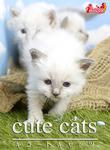 cute cats10 バーマン-電子書籍