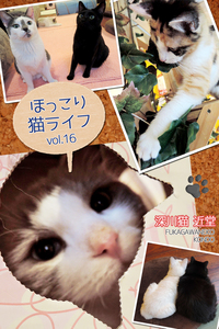 ほっこり猫ライフ vol.16