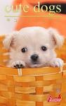 cute dogs16 チワワ-電子書籍