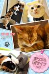 ほっこり猫ライフ vol.7-電子書籍