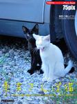 東京さんぽ猫-電子書籍