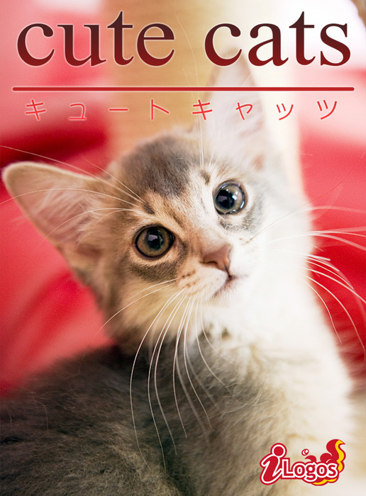 cute cats08 ソマリ拡大写真