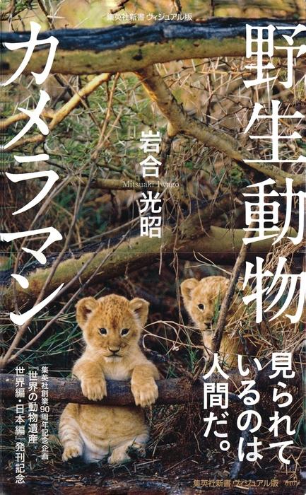 野生動物カメラマン拡大写真