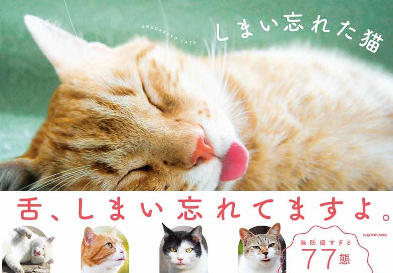 しまい忘れた猫拡大写真