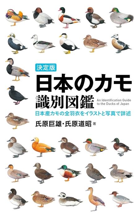 決定版 日本のカモ識別図鑑拡大写真
