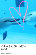 「イルカさんがいっぱい」シリーズ