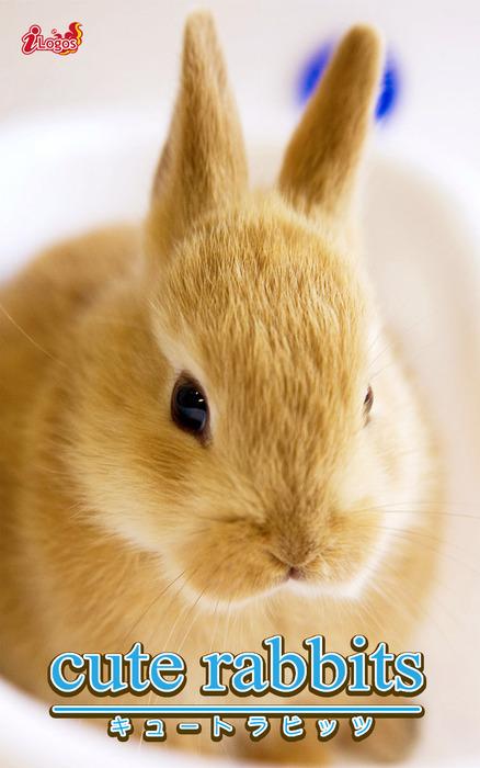 cute rabbits01 ミニウサギ拡大写真