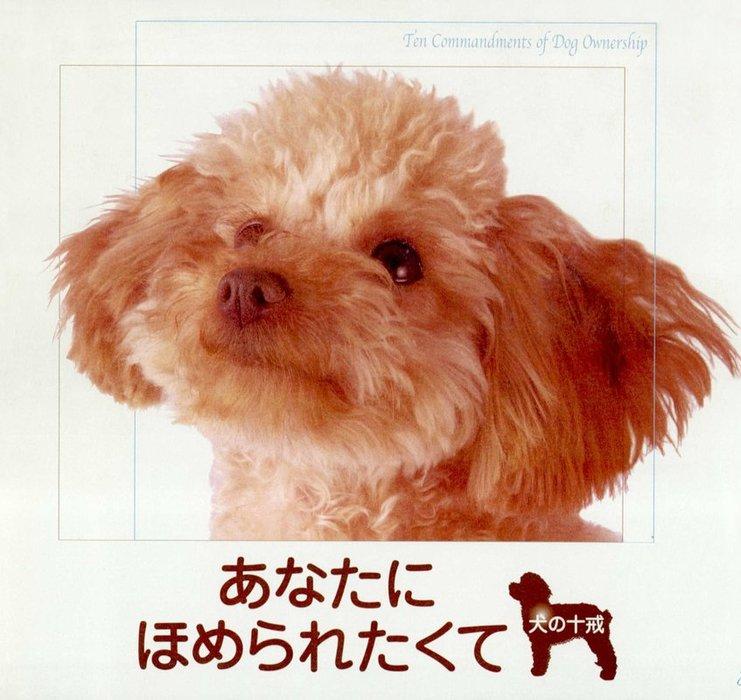 あなたにほめられたくて : 犬の十戒拡大写真