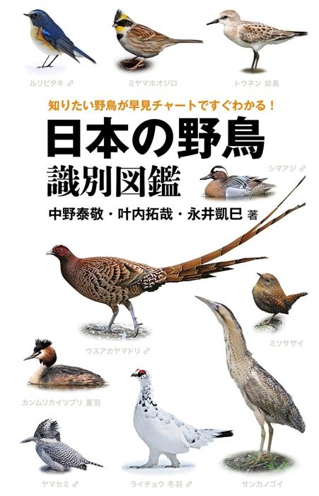 日本の野鳥識別図鑑拡大写真