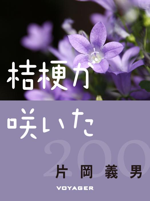 桔梗が咲いた拡大写真