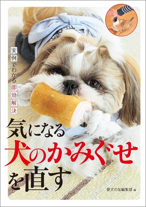 気になる犬のかみぐせを直す拡大写真