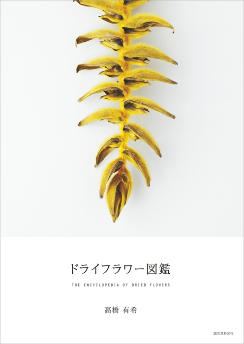 ドライフラワー図鑑拡大写真