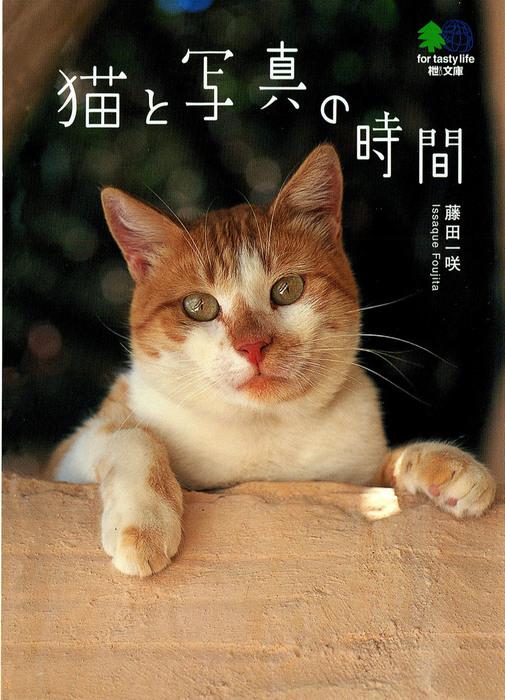 猫と写真の時間拡大写真