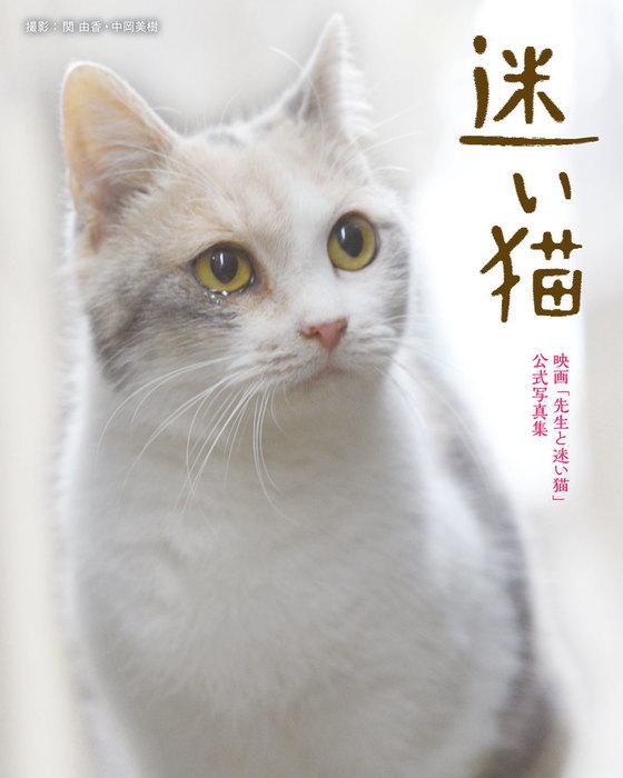 迷い猫拡大写真