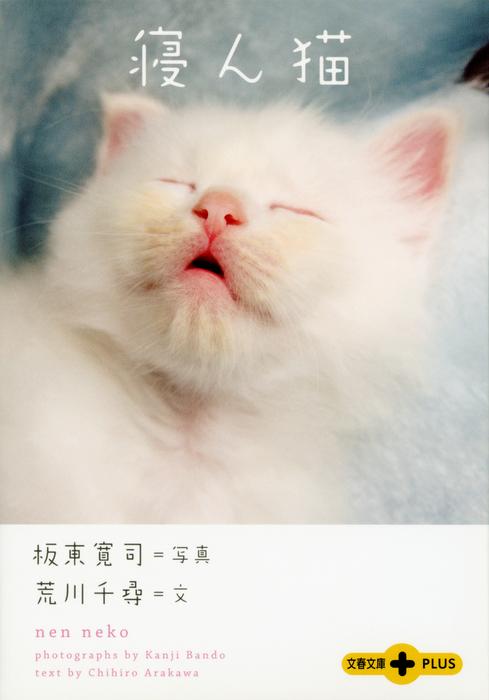 寝ん猫拡大写真