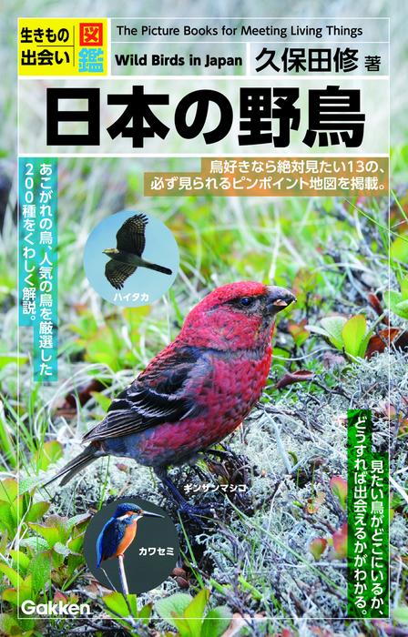 日本の野鳥拡大写真