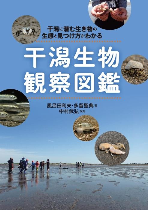 干潟生物観察図鑑拡大写真