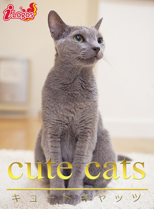 cute cats09 ロシアンブルー拡大写真