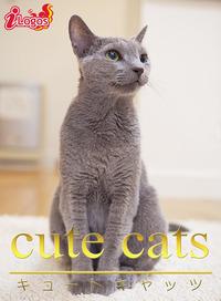 cute cats09 ロシアンブルー-電子書籍