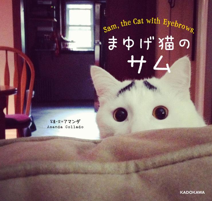まゆげ猫のサム拡大写真
