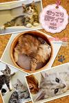 ほっこり猫ライフ vol.4 子猫編-電子書籍