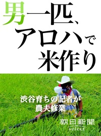 男一匹、アロハで米作り 渋谷育ちの記者が農夫修業