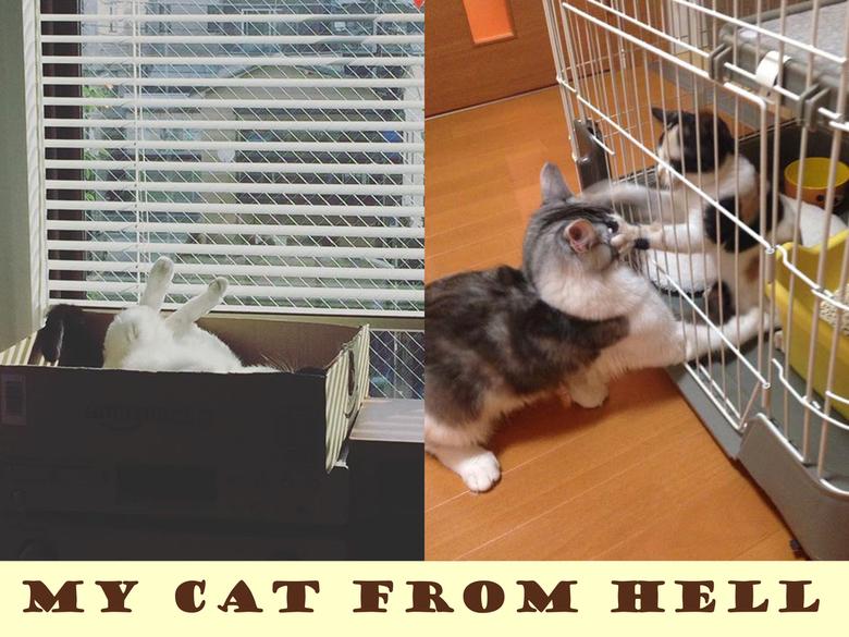 MY CAT FROM HELL拡大写真