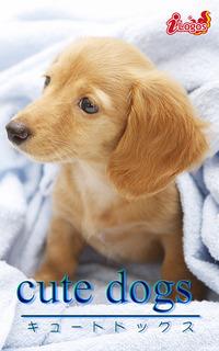 cute dogs23 ダックスフンド