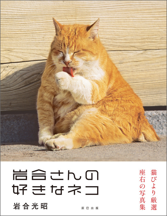 岩合光昭写真集 岩合さんの好きなネコ拡大写真