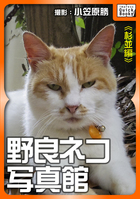 野良ネコ写真館【杉並編】