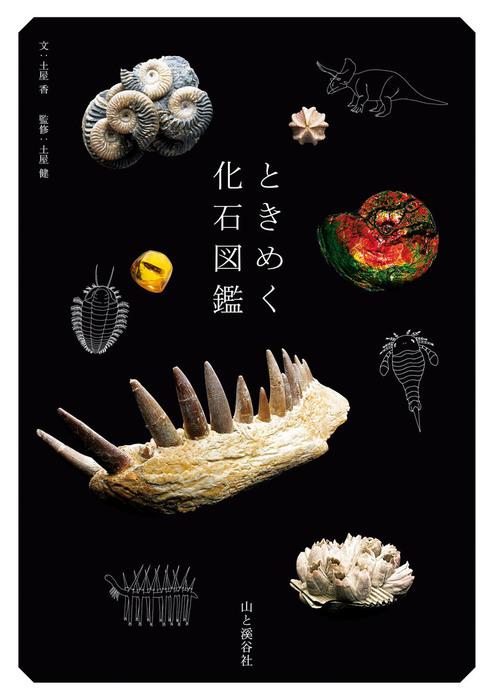 ときめく化石図鑑拡大写真
