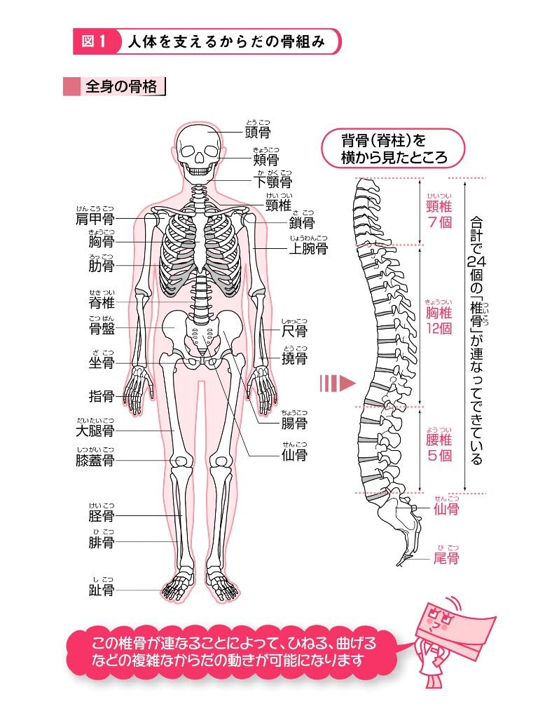 名医が図解! 腰痛・膝の痛みは解消できる! (1) 脊柱や膝関節のメカニズム-電子書籍