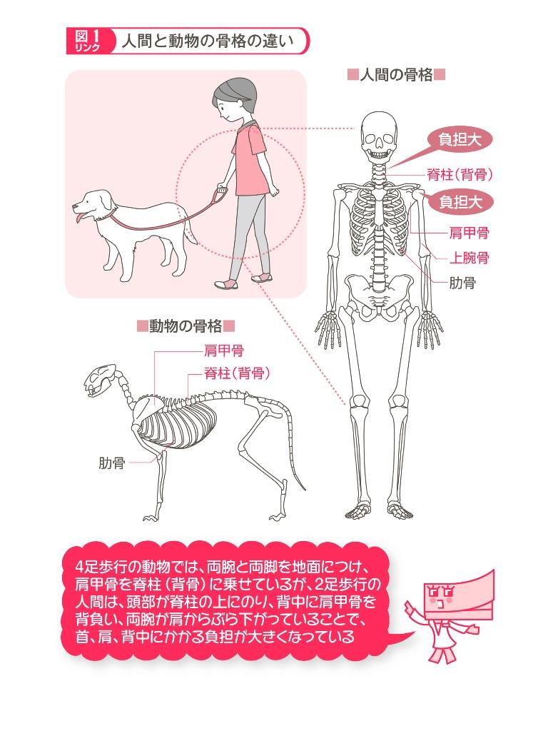 名医が図解! 肩こり・首の痛みは解消できる! (1) 首・肩の構造とはたらき-電子書籍